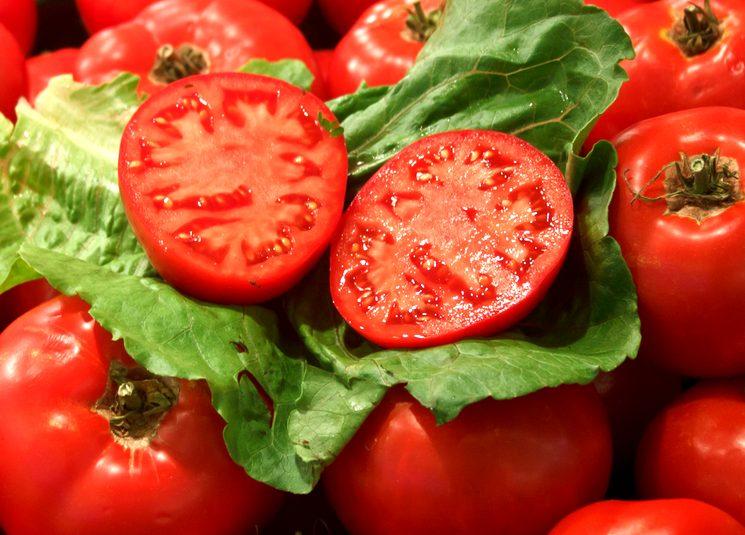 Оптимальный баланс минеральных удобрений для томатов