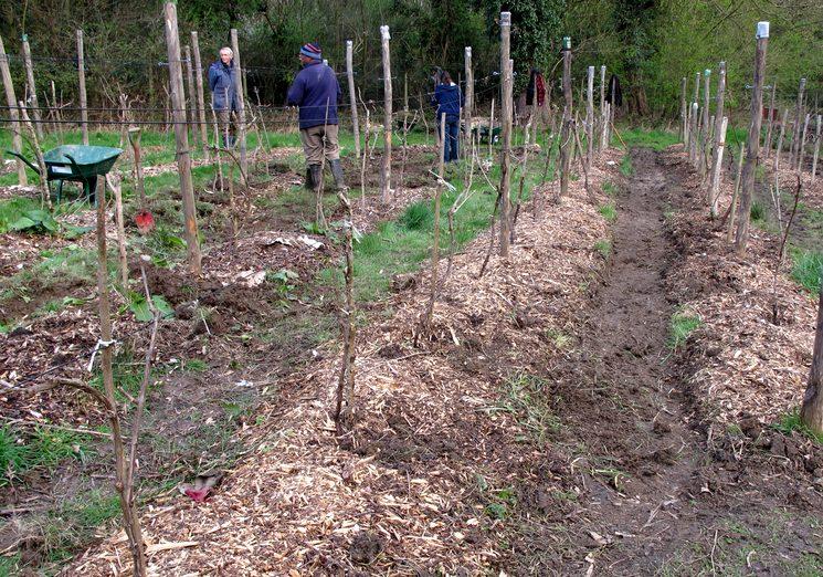 Чем и как укрыть виноград на зиму