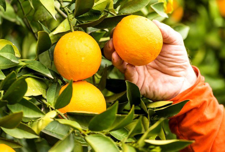 Интересные факты про апельсин
