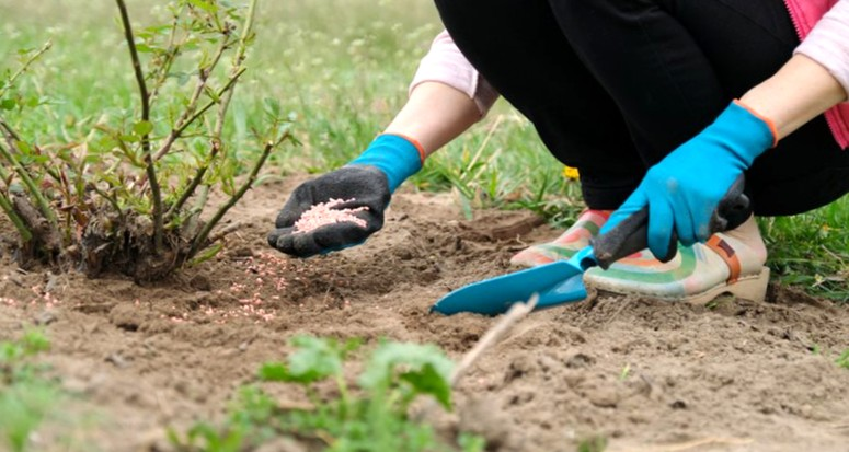 Подкормка садовых культур осенью