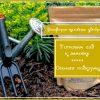 Удобряем сад осенью - используем фосфорно-калийные удобрения