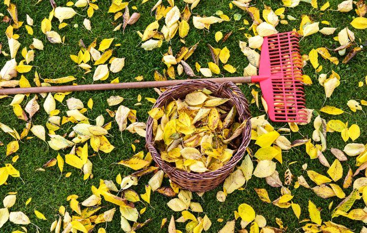 Готовим свой сад и огород к зиме