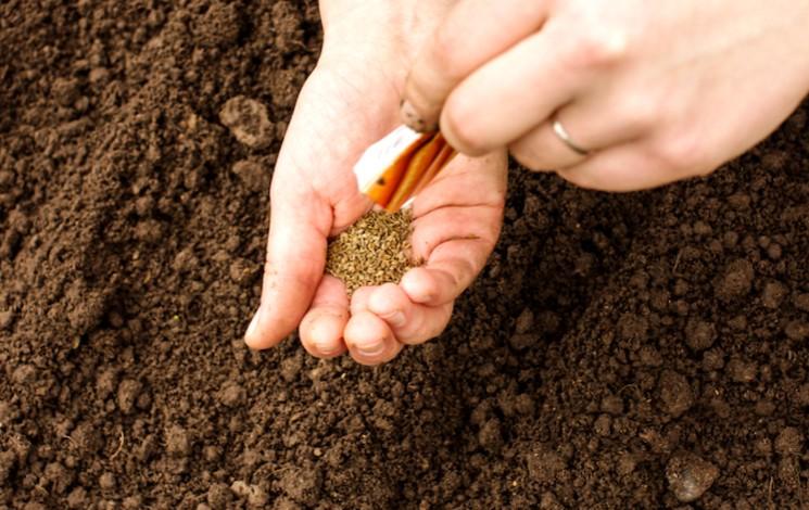 Как готовить почву перед посевом семян моркови