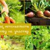 Как использовать ботву овощей на дачном участке