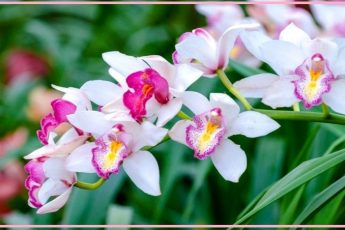 Как подкормить орхидею - нужные удобрения и способы