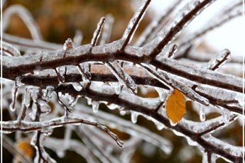 Как помочь подмерзшему дереву