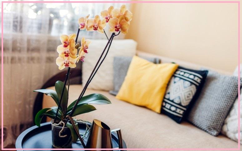 Как определить необходимость подкормки орхидеи