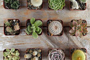 Как правильно ухаживать за кактусом - полив, пересадка, подкормка и частые ошибки