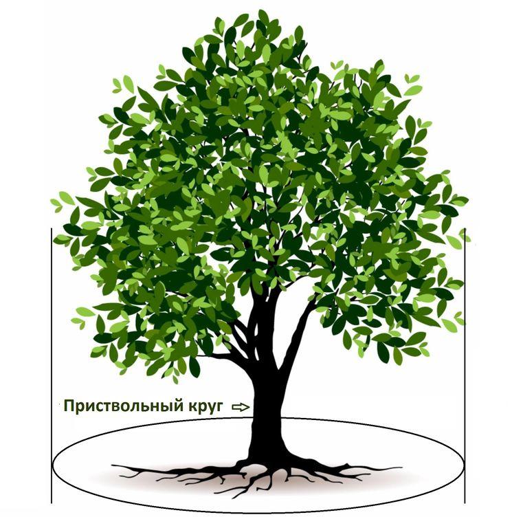 Органические удобрения для плодовых