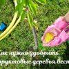 Как удобрять плодовые деревья весной