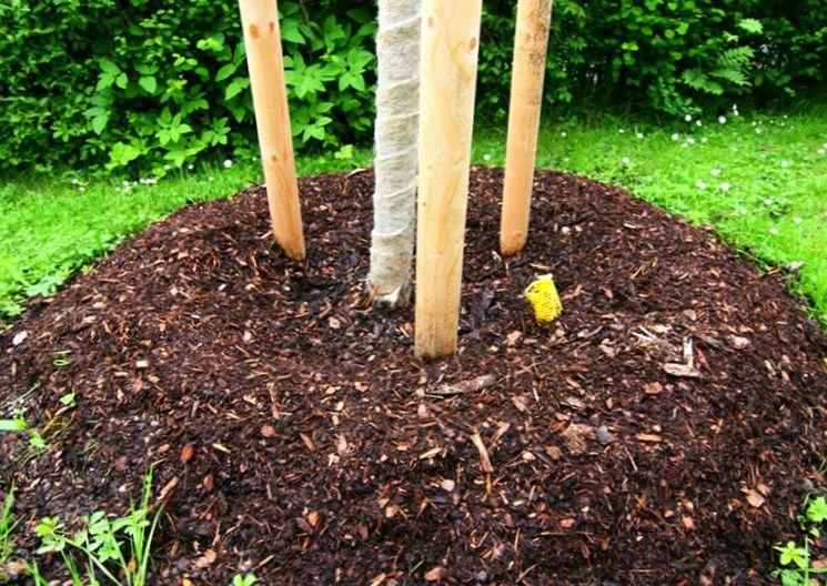 Утепление ствола дерева на зиму