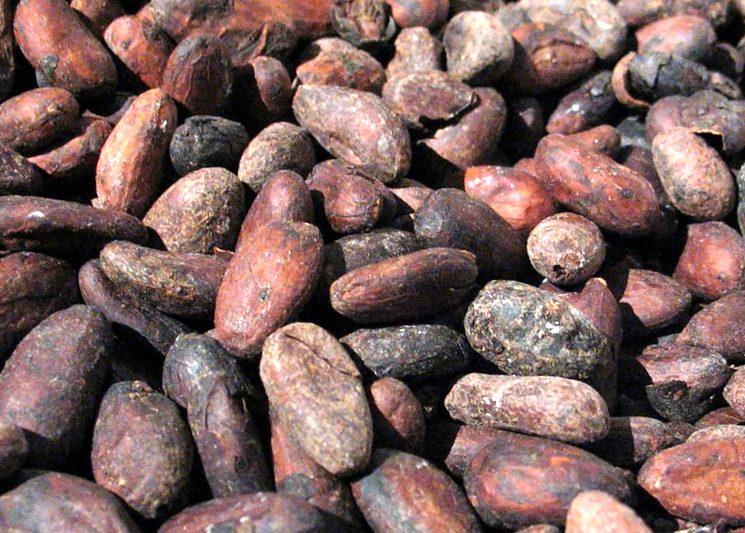 Какао-бобы для приготовления шоколада в домашних условиях