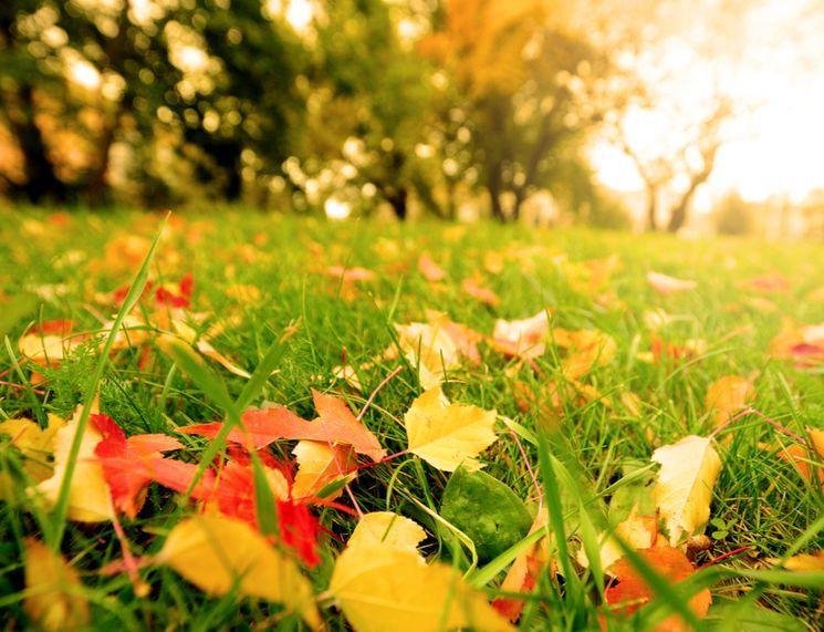 Осенние удобрения: что и чем удобряют осенью
