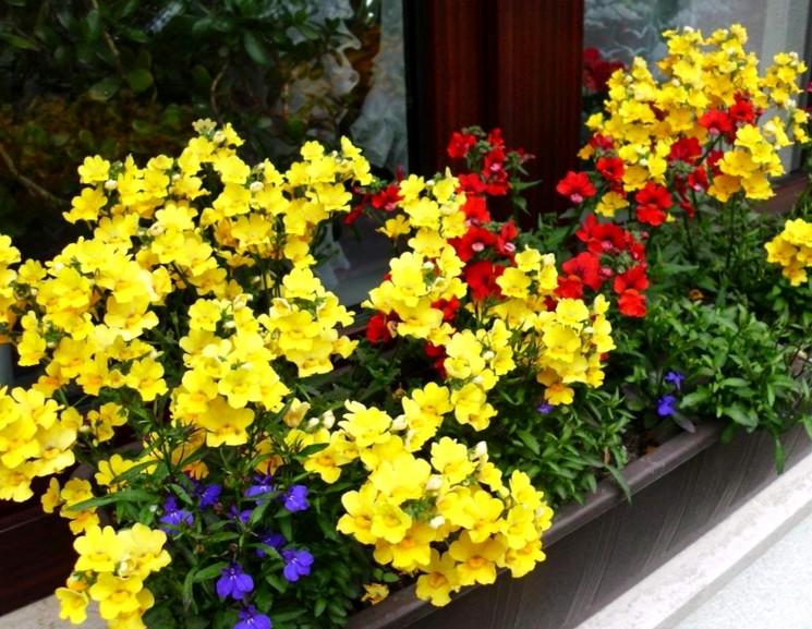 >Когда сеять семена цветов
