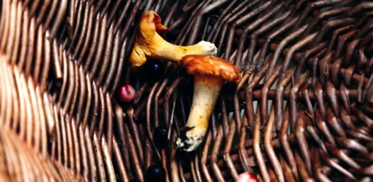 Контроль сбора ягод и грибов