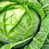 Лучшие сорта белокаочанной капусты