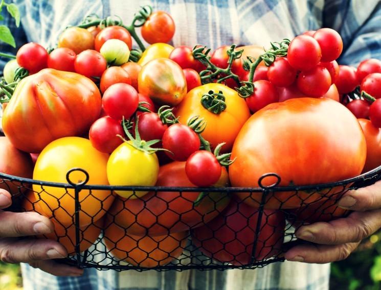 Лучшие сорта томатов для теплицы - фото, описание и характеристика