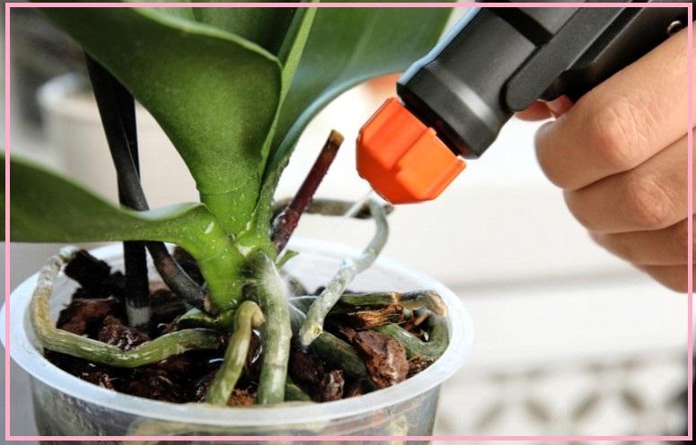Меры предосторожности по уходу за орхидеей