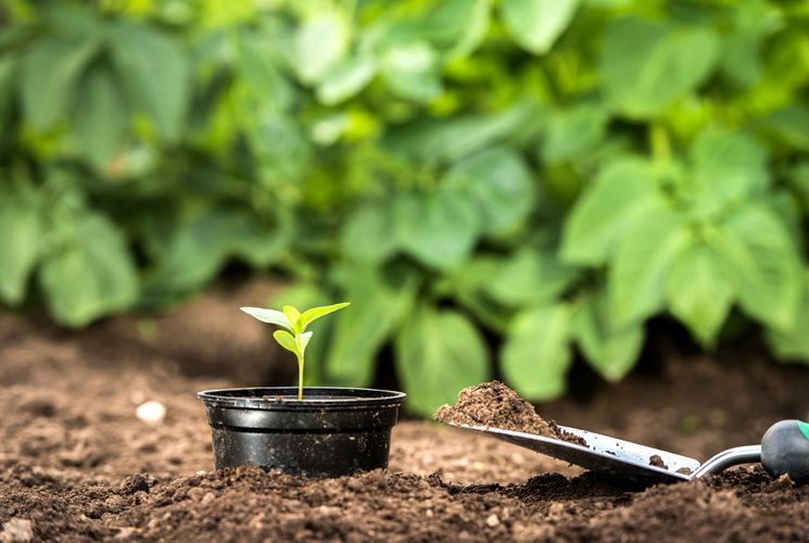 Подкормка растений в саду