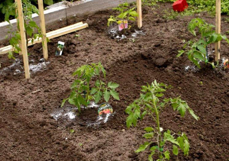 Минеральные удобрения для томатов