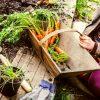 Как и когда сажать морковку осенью
