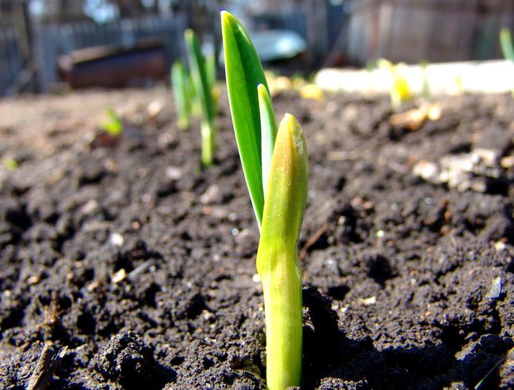Нужно ли рыхлит землю после посадки лука