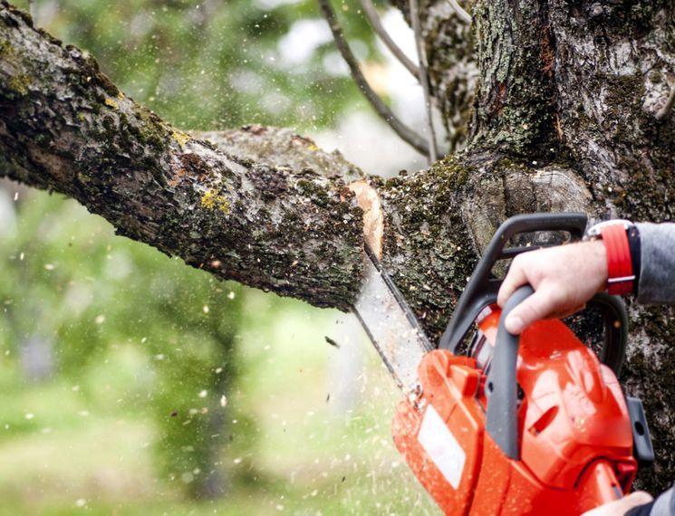Осенняя обрезка деревьев