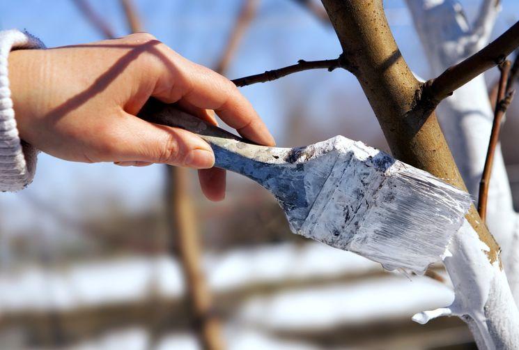 Побелка деревьев когда лучше белить