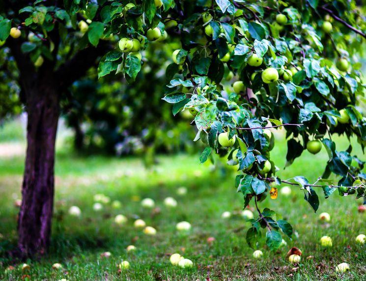 Как утеплять деревья на зиму - подготовка плодовых к холодам