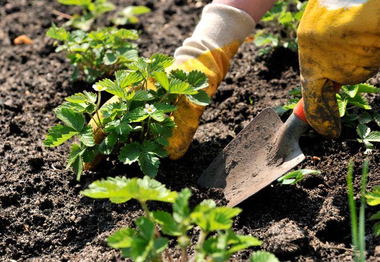 Календарь огородника и садовода на апрель