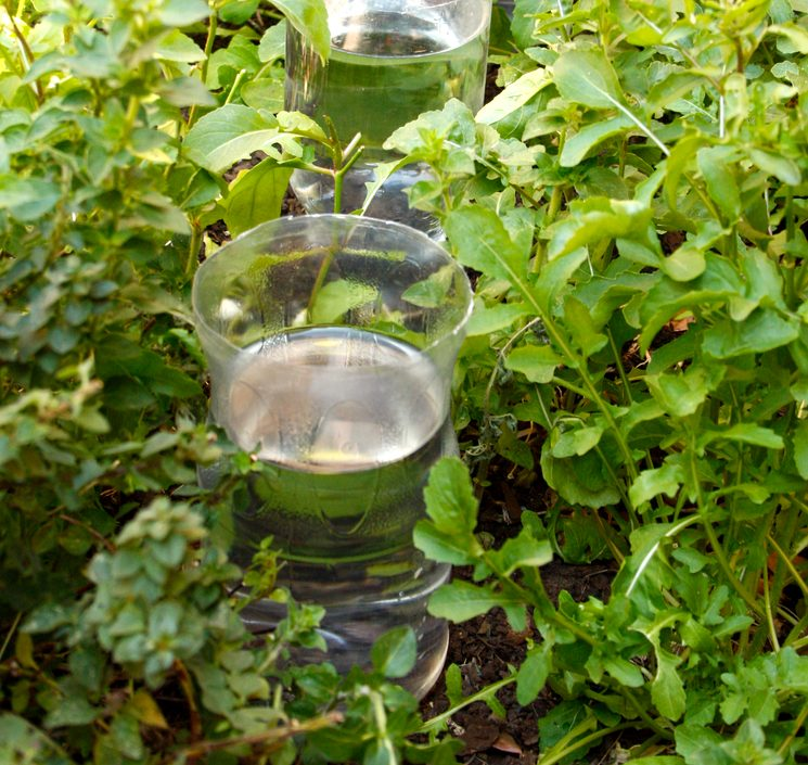Полив в теплице из пластиковых бутылок