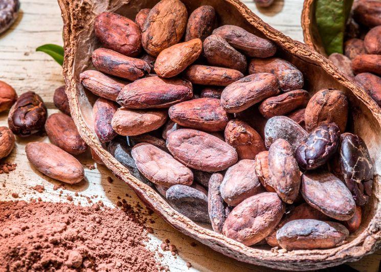 В чем заключается польза какао
