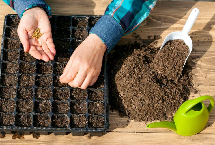 Основные правила посева семян комнатных растений