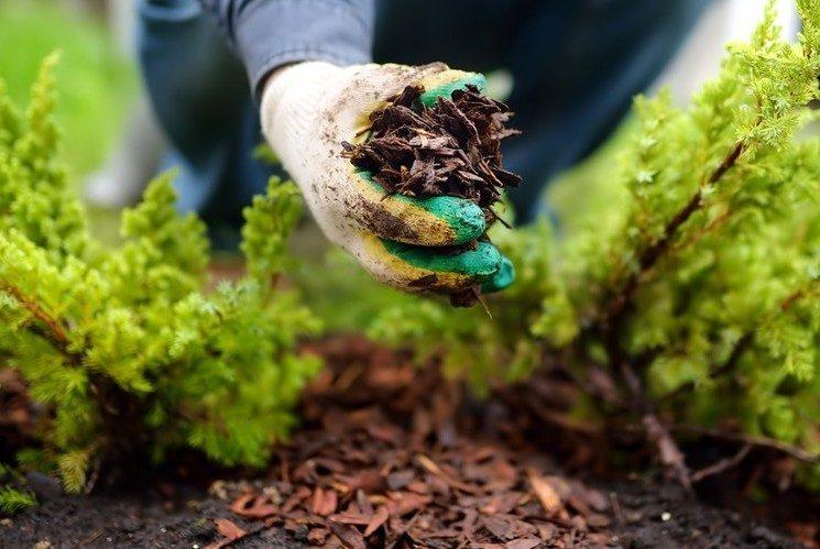 Правильное мульчирование почвы