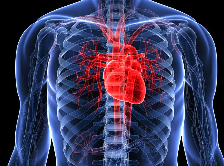 Причины высокого сердечного пульса
