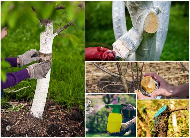 Профилактические меры для защиты деревьев необходимые в марте