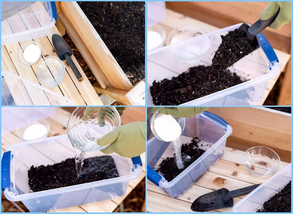 Проверяем кислотность почвы самостоятельно