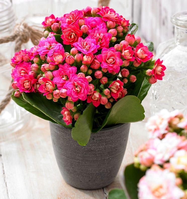 Картинки с цветами каланхоэ, днем рождения