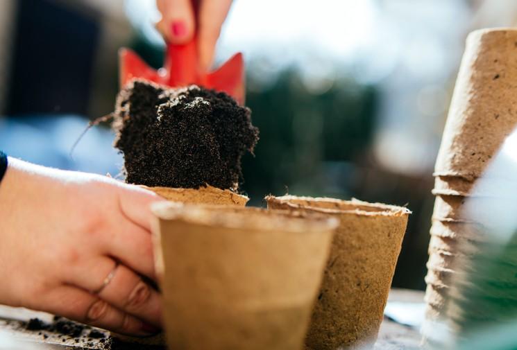 Выращивание рассады клубники