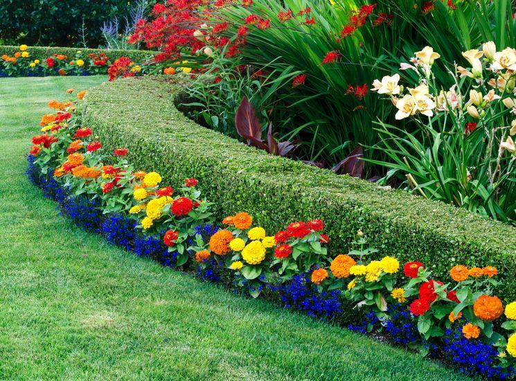 Вечнозелёный самшит для украсит ваш сад