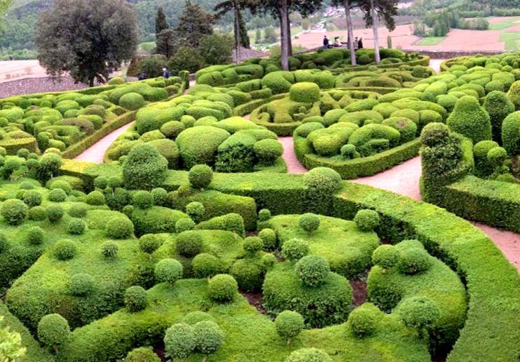 Самшиты - вечнозеленые кустарники