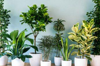 Семена комнатных растений - как выбрать и когда лучше сеять