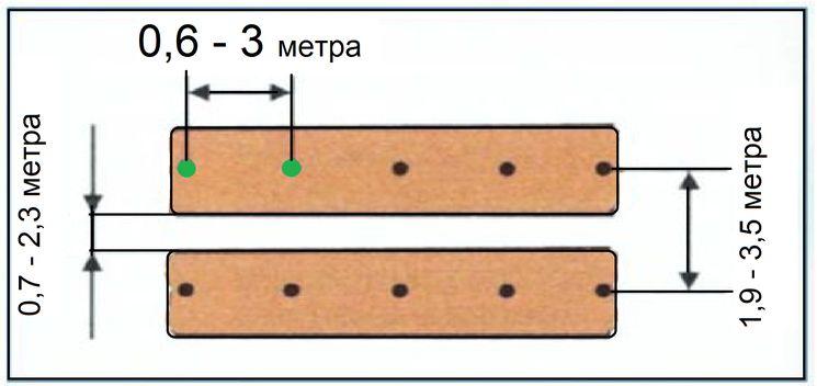 Схема посадки кустов ежевики