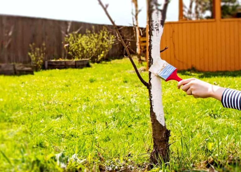 Смесь для побелки деревьев - состав и пропорции