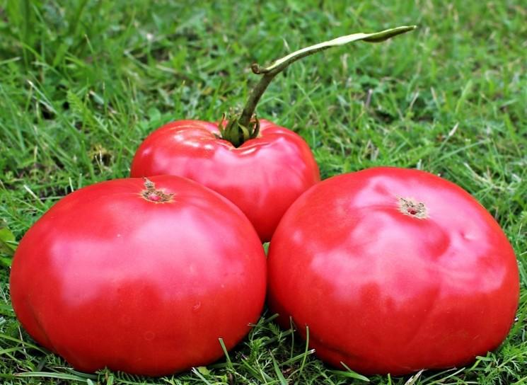 Сорт томатов Пинк Парадайз