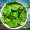 Сорта и виды зеленого салата