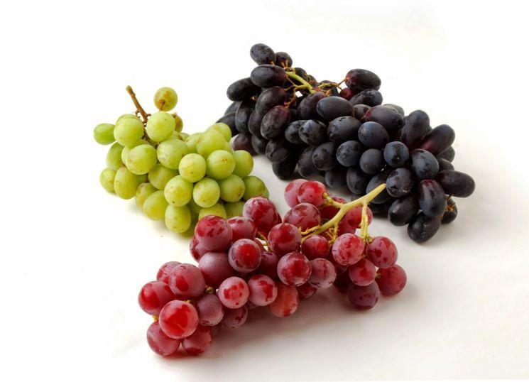Сорта винограда для открытого и закрытого грунта