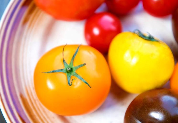 Сорта томатов разного срока поспевания