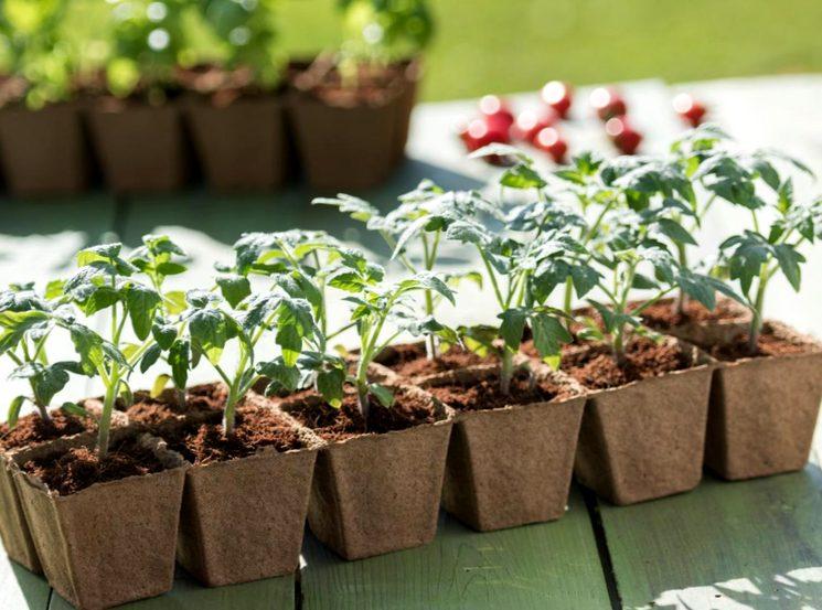 земля для рассады помидор купить