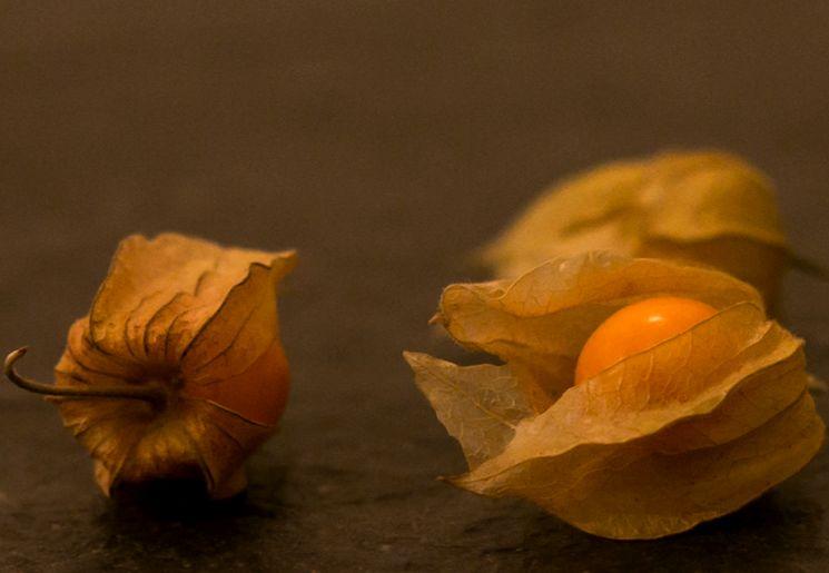 Съедобные плоды физалиса
